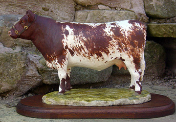 Beef Shorthorn Cow