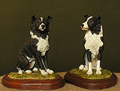 Border Collie Sheepdogs